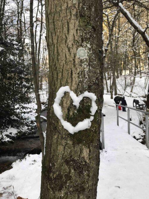 Baum im Winter an dessen Rinde ein Herz aus Schnee geklebt wurde