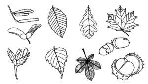 weißes Blatt Papier mit verschiedenen gemalten Blättern
