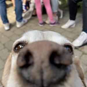 Bild für Kinder sagen Tiere fühlen 2